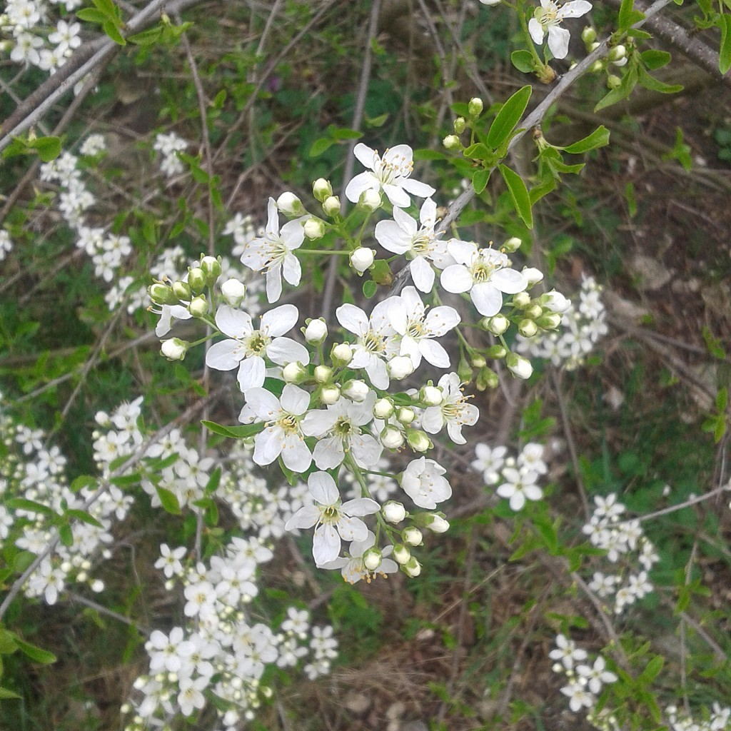 Wszechobecne kwiaty, które przecudnie pachną.