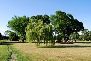 zentralfriedhof kreis