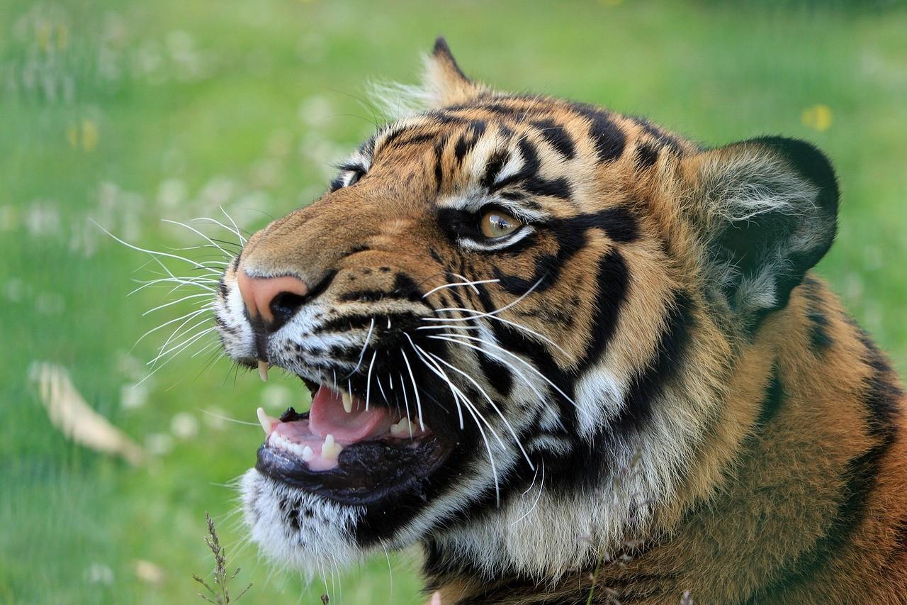 Tygrysie oko – rysunek ołówkiem