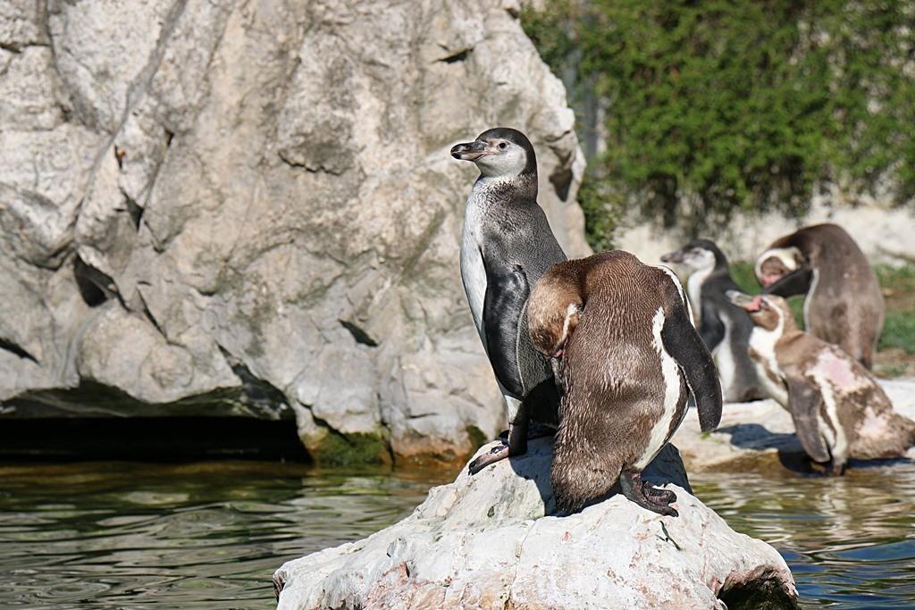 pingwiny  dwa